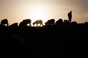 India Travel Photography - Ozzie Hoppe