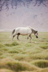 underfireweswim-ozzie-hoppe-photography-ladakh-33
